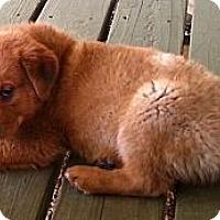 Adopt A Pet :: Al - Vista, CA