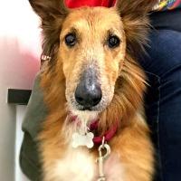 Adopt A Pet :: Maggie-Pending! - Detroit, MI