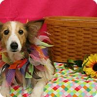 Adopt A Pet :: Peggy - Mission, KS