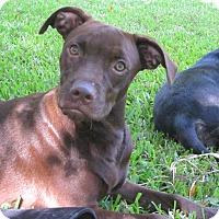 Adopt A Pet :: Laura Ingalls - Wilmington, DE