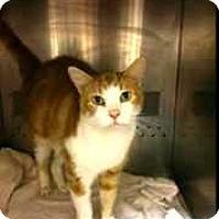 Adopt A Pet :: Marmaduke - Caistor Centre, ON