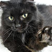 Adopt A Pet :: Abby - Fort Leavenworth, KS