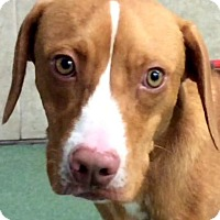 Adopt A Pet :: ETHAN (video) - Los Angeles, CA