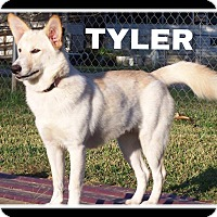 Adopt A Pet :: Tyler - SOUTHINGTON, CT