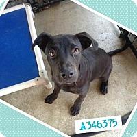 Adopt A Pet :: CAP - San Antonio, TX