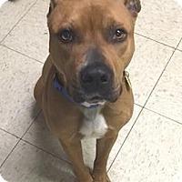 Adopt A Pet :: Denver - Cleveland, OH