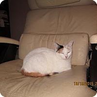Adopt A Pet :: Recho - Houston, TX
