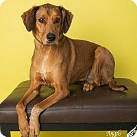 Adopt A Pet :: Marley - Roanoke, VA