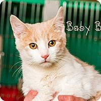 Adopt A Pet :: Baby Boy - Somerset, PA