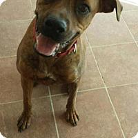 Adopt A Pet :: Duke - Olympia, WA
