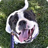 Adopt A Pet :: Mackey - Meridian, ID