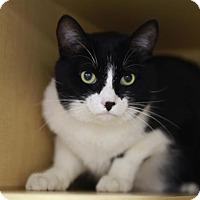 Adopt A Pet :: Bart - Kettering, OH