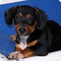 Adopt A Pet :: Frisco - Kittery, ME