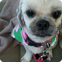 Shih Tzu Mix Dog for adoption in Dana Point, California - Penny