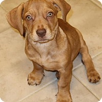 Adopt A Pet :: Abner - Towson, MD