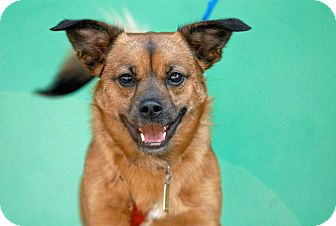 Terrier (Unknown Type, Small) Mix Dog for adoption in Pottsville, Pennsylvania - Tito