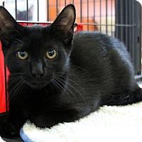 Adopt A Pet :: Boyd - Sarasota, FL