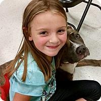 Adopt A Pet :: Athena - New Kensington, PA
