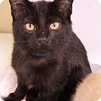 Adopt A Pet :: Squeaks - Georgetown, TX