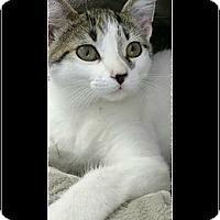 Adopt A Pet :: Skipurr - Waldorf, MD