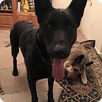 Adopt A Pet :: Kuni - Alameda, CA