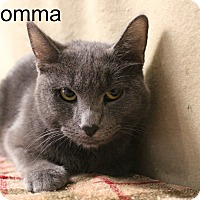 Adopt A Pet :: Momma - Melbourne, KY