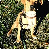 Adopt A Pet :: Liza - Pembroke, NY