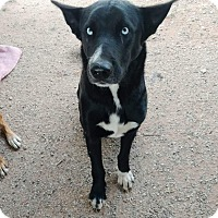 Adopt A Pet :: Ruger (PRELISTED) - Fort Collins, CO