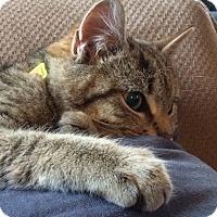 Adopt A Pet :: Leo & Bobcat - Horsham, PA