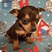 Adopt A Pet :: Atom - Sussex, NJ