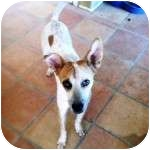 Blue Heeler Mix Dog for adoption in Gilbert, Arizona - CHARLIE