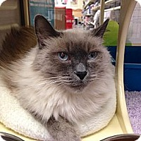 Adopt A Pet :: Pasha - Foothill Ranch, CA