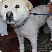 Adopt A Pet :: Dixie - New Boston, NH