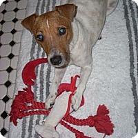 Adopt A Pet :: Akiba - Rhinebeck, NY