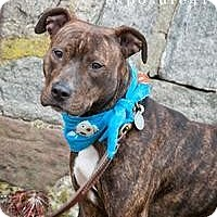 Adopt A Pet :: LOLA - Prospect, CT