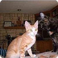 Adopt A Pet :: Eggbert - Lombard, IL