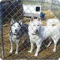 Adopt A Pet :: Aspen & Dakota - Belleville, MI