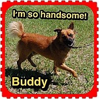 Adopt A Pet :: Buddy - Williston, FL