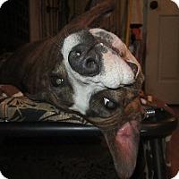Adopt A Pet :: Brenda - Copperas Cove, TX
