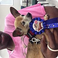 Adopt A Pet :: Rocky - S. Pasedena, FL