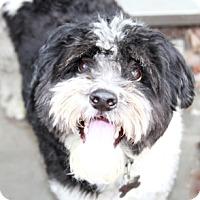 Adopt A Pet :: Indy - Norwalk, CT