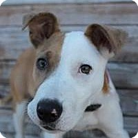 Adopt A Pet :: Fairy - Yukon, OK