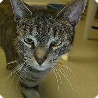 Adopt A Pet :: Pic-A-Lily - Hamburg, NY