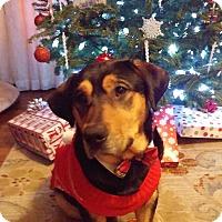 Adopt A Pet :: Samwell Tarly - Jersey City, NJ