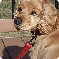 Adopt A Pet :: Thatch - Alpharetta, GA