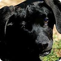 Adopt A Pet :: MIKA(ADORABLE PUPPY!!) - Wakefield, RI