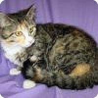 Adopt A Pet :: Sisi - Powell, OH