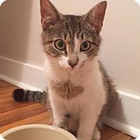 Adopt A Pet :: Siobhan - Philadelphia, PA