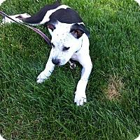 Adopt A Pet :: Nathan - Barnegat, NJ