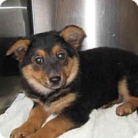 Adopt A Pet :: *HEART - Norco, CA
